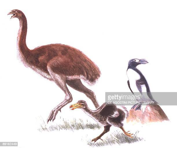 Illustration representing Moa Dodo and Great Auk