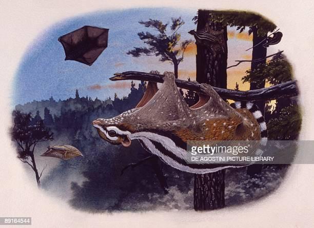 Illustration representing Planetetherium hanging on tree