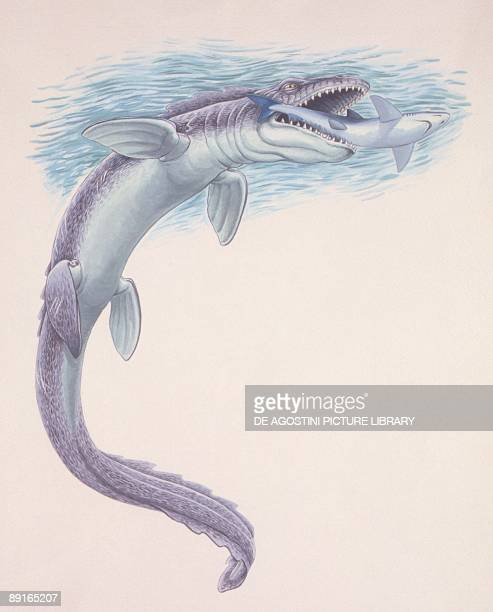 Illustration representing Tylosaurus swimming in sea and catching fish