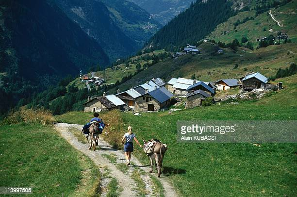 Illustration Ride With Donkeys In Tignes France In January 1998Tignes