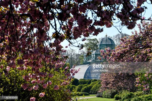 Illustration shows flowers at a press visit to the greenhouses of the Royal castle in Laken/Laeken, Brussels, before the opening to the public later...