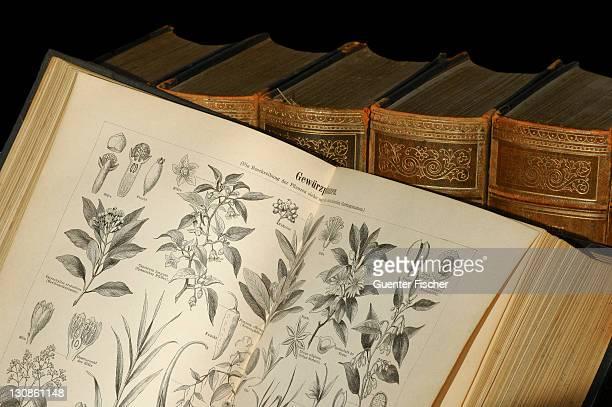 illustrations of spice plants in an old encyclopedia - enzyklopädie stock-fotos und bilder