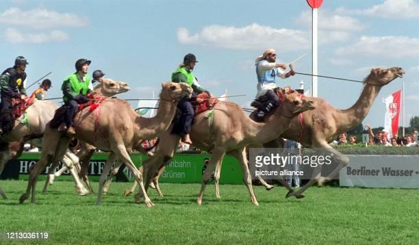 """Im gestreckten Galopp kämpfen die Kamele um den Sieg beim """"Großen Preis von Brandenburg"""" am 17.8.1997 in Hoppegarten. Vor rund 42000 Zuschauern..."""