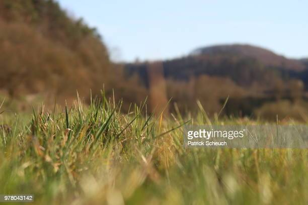 im gras liegend - gras stock pictures, royalty-free photos & images