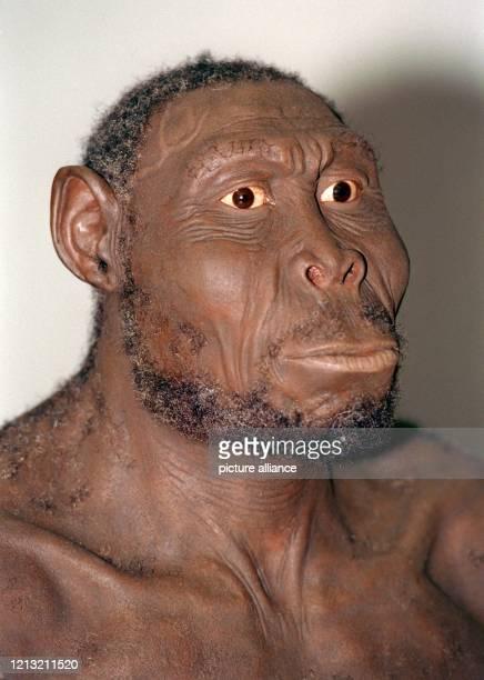Im Hessischen Landesmuseum wird am 16.9.1998 der Kopf eines Urmenschen, des Homo Rudolfensis , gezeigt. In Teamarbeit haben die Forscher des...