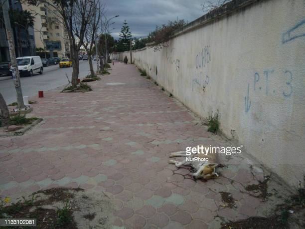Image depicts graphic content] A stray dog dead body with bullet marks and covered in blood, is seen on the ground of a street in Ariana downtown,...