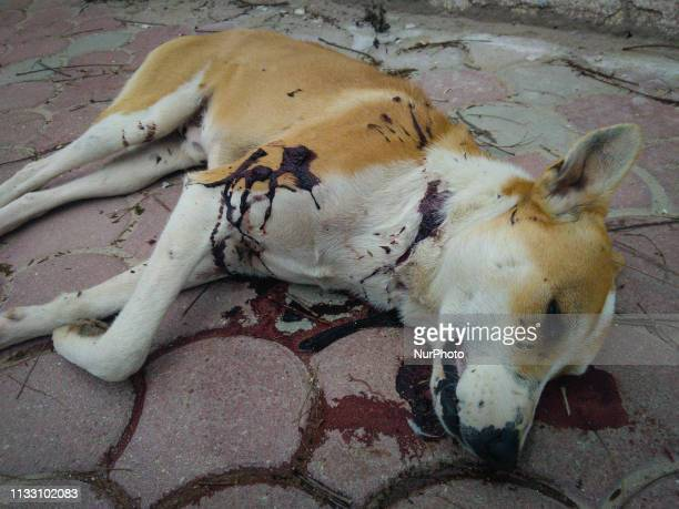Image depicts graphic content] A stray dog dead body with bullet marks and covered in blood is seen on the ground of a street in Ariana downtown...