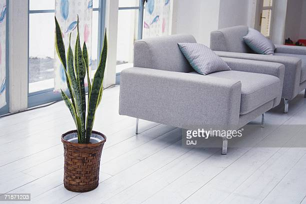Image of a Living Room With a House Plant and a Grey Sofa, Side View