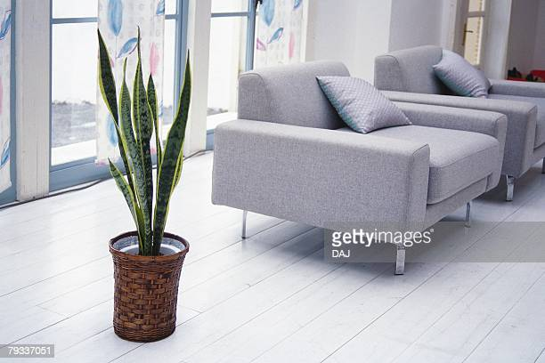 image of a living room with variegated snake plant, high angle view, side view - sanseveria trifasciata stock pictures, royalty-free photos & images