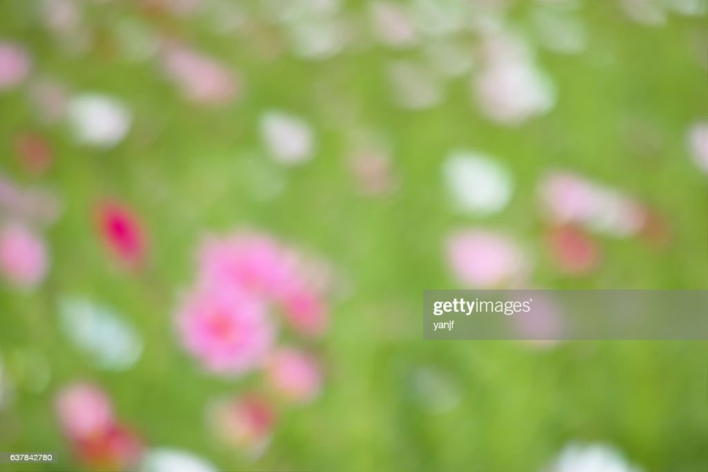 Image Of Blurry Nature Background Stock Photo Getty Images