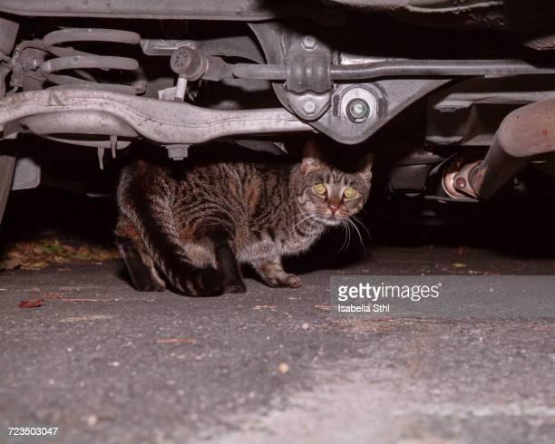 Image of cat under car