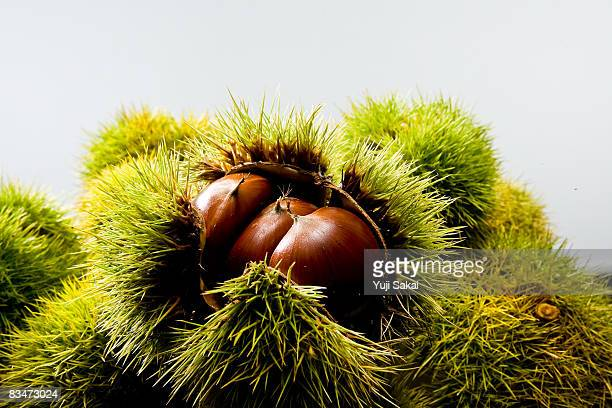 image of chestnut - chestnut food stock pictures, royalty-free photos & images