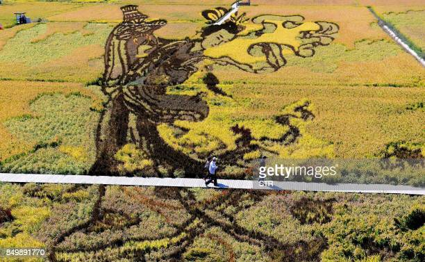 TOPSHOT A image of Chinese traditional beauty created using different varieties of rice is seen in a paddy during the harvest season in Shenyang in...