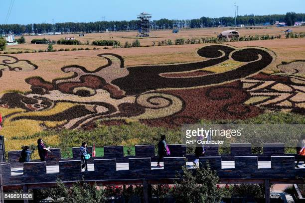 A image of dragon created using different varieties of rice is seen in a paddy during the harvest season in Shenyang in China's northeast Liaoning...