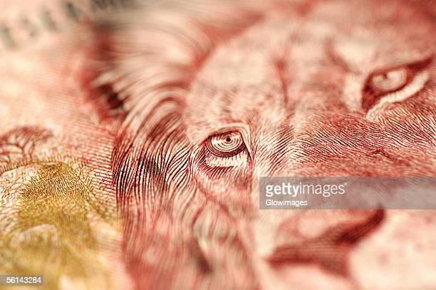 'Image of lion on bank note, close-up'