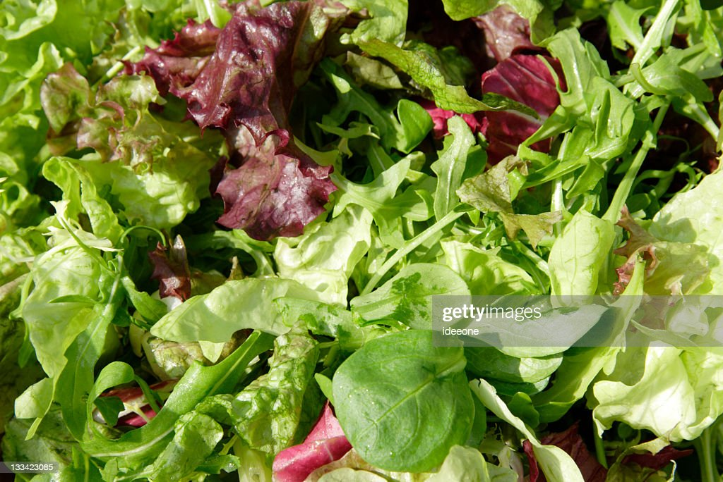 Image of Mixed fresh lettuce of different types : Stock Photo