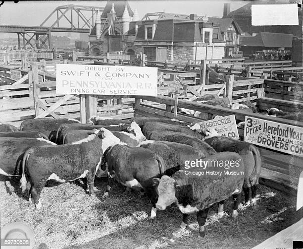 Image of prize winning Hereford cattle standing in a pen at the Union Stockyards in Chicago Illinois 1929 The text on the sign above the pen reads...
