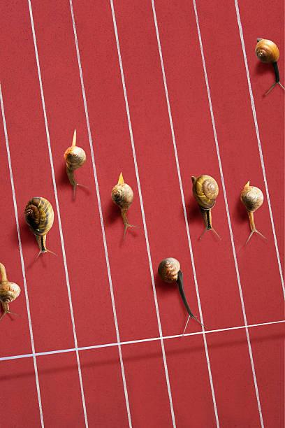 Image Of Snail Wall Art