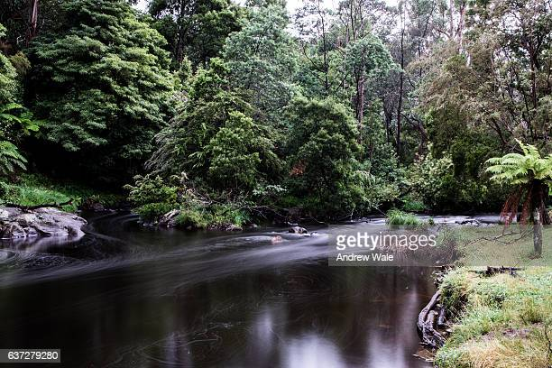 Image of the Upper Yarra River