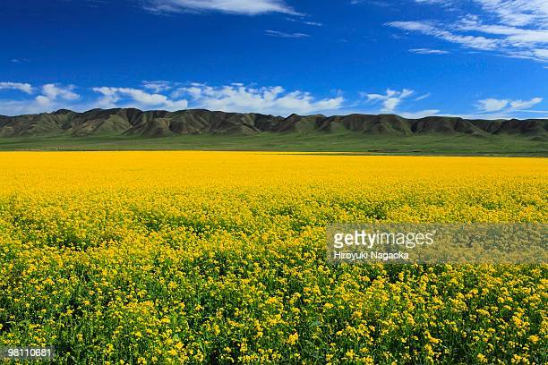 image of tibet - qinghai province stock photos and pictures
