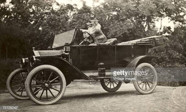 Image shows a dog named King as he wears driving goggles and sits in the driver's seat of a Model T Ford car with his paws on the steering wheel High...