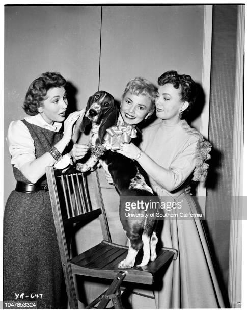 1 images 'Cleo' the talking basset hound on Jackie Cooper's TV program will appear at dog show 25 November 1955 Elaine Edwards Lori Mitchell Elaine...