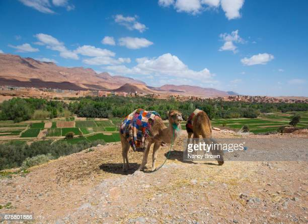 Images of Berber Life in The Atlas Mountains Near Marrakesh Morocco N. Africa.