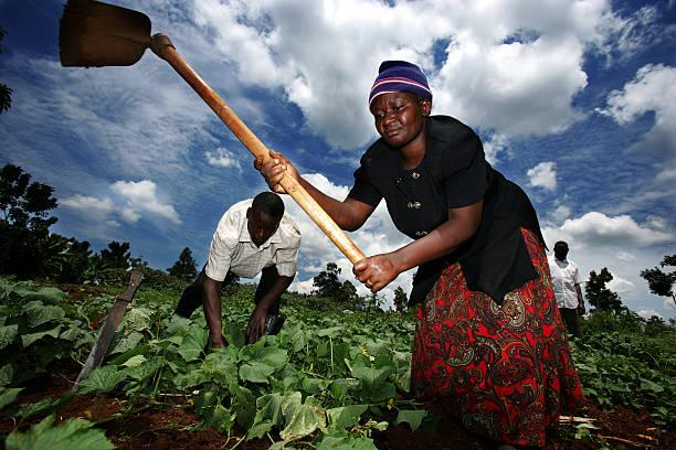 World Economic Forum Business Alliance Against Chronic Hunger Initiatives