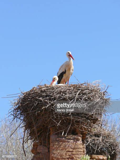Images of Ruins & Storks in The Chellah (walled city) in Rabat Morocco.