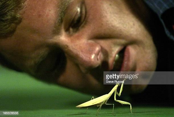 IMAGEToronto Sun photographer Greg Henkenhaf gets up close with a praying mantis that landed court side during second round action at the du Maurier...