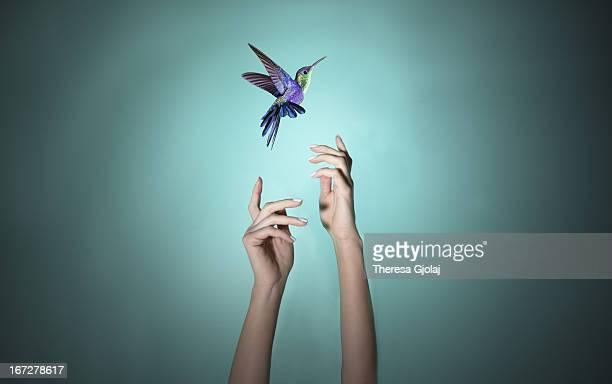 imagination with inspiration - beija flor imagens e fotografias de stock