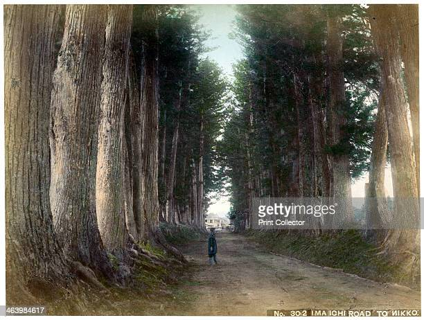 Imaichi Road at Nikko Japan early 20th century An avenue of 13000 cedar trees originally planted in the first half of the 17th century