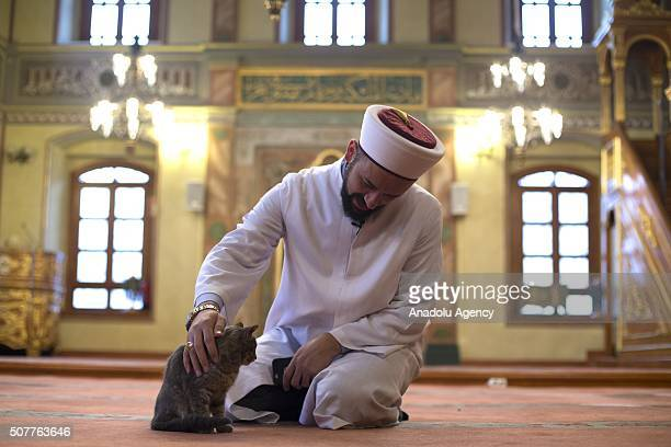 Imam of Aziz Mahmud Hudayi mosque takes care of a cat inside the mosque in Istanbul Turkey on January 31 2016 Istanbul is well known for the stray...