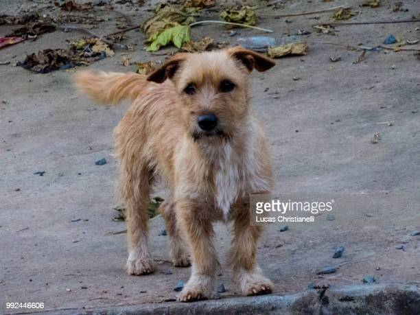 img_3519.jpg - terrier stock pictures, royalty-free photos & images