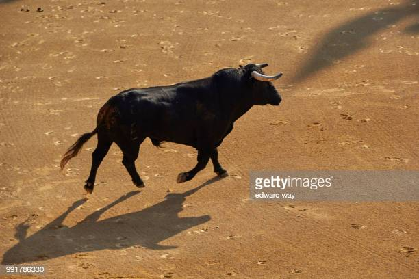 img_7085.jpg - bullfight stock pictures, royalty-free photos & images