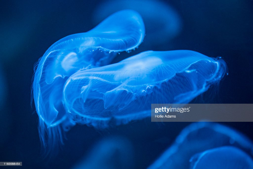 Immersive Jellyfish Installation By Rimini Protokoll Revealed : News Photo