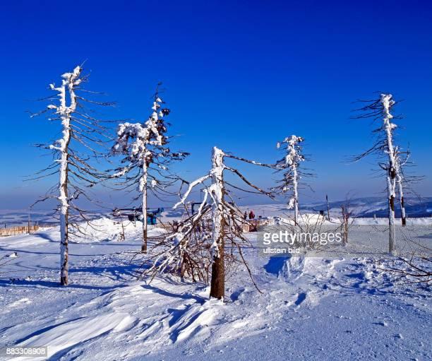 Immissionsgeschaedigte Fichten auf dem winterlichen Erzgebirgskamm Waldsterben durch Umweltgifte auf dem Kahlenberg