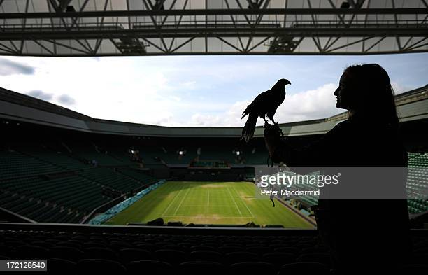 Imogen Davies holds Rufus a Harris hawk high up in the stands above Centre Court at the Wimbledon Lawn Tennis Championships on July 1 2013 in London...
