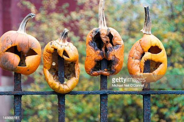 impaled pumpkins - ugly pumpkins stock photos and pictures