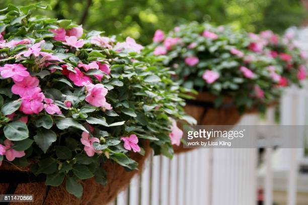 impatients in balcony baskets - hanging basket stock pictures, royalty-free photos & images