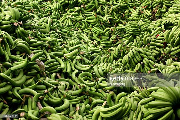 Imperfect bananas sit in large piles in Hacienda Norma Guisella Ecuador on Aug 15 2007 The bananas that do not meet the standards of the quality...