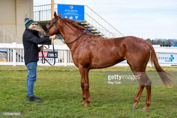 Impetus after winning the Hertz 2YO Maiden Plate, at Sportsbet-Ballarat Synthetic Racecourse on June 30, 2020 in Ballarat, Australia.