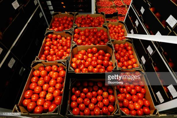 Imported tomatoes from Spain sit at the Fruit Terminal at the Port of Southampton, operated by Associated British Ports Holdings Ltd., in...