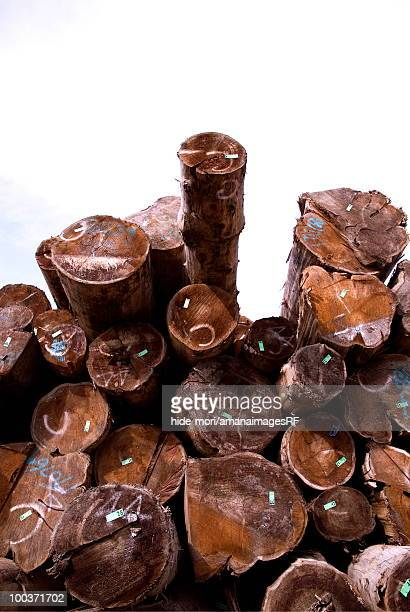 Imported Wood Collection Site