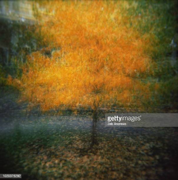 impresisonistic image of a tree with fall foliage in portland, oregon - impressionism stock photos and pictures