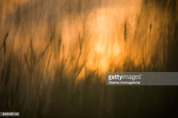 Impressionistic sunset behind field of grasses