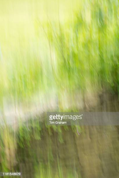 Impressions of Nature drystone wall and trees abstract England