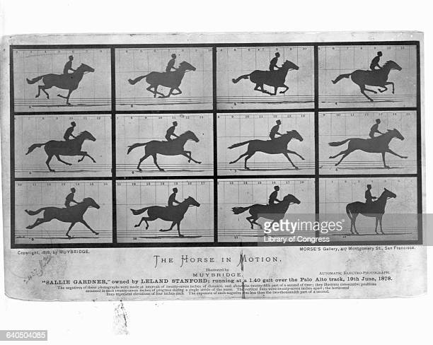 In 1877 Eadweard Muybridge helped Leland Stanford win a wager regarding whether or not all four legs of a horse come off the ground while galloping...