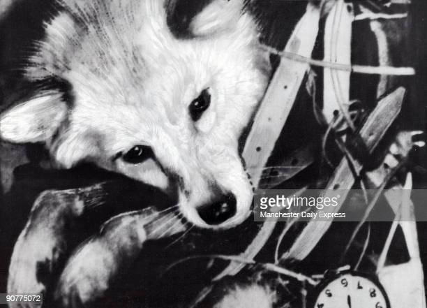 In 1957 a dog Laika became the first living organism to reach Earth's orbit travelling aboard a Soviet Sputnik 2 rocket Rising temperatures due to...