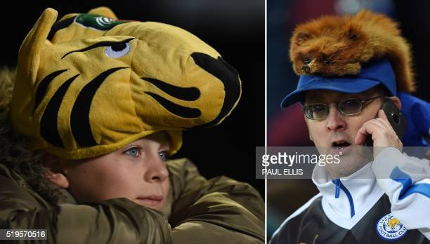In a combination of pictures created on April 7 2016 a Leicester Tigers rugby fan wearing a tiger hat waits for kick off of the European Champions...